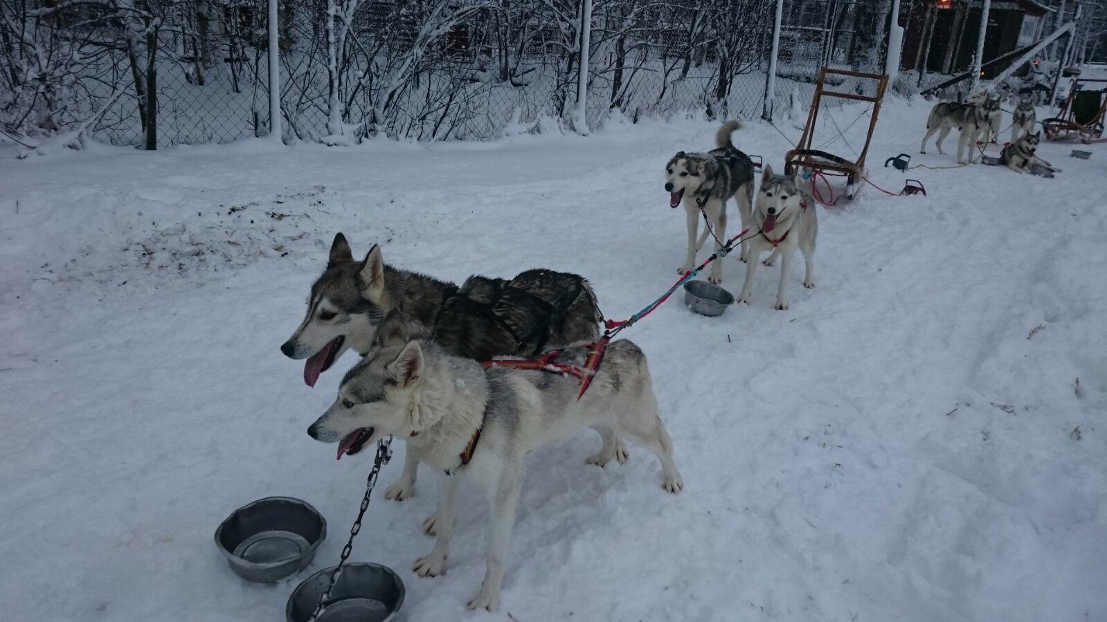Hundeschlittentour Schweden