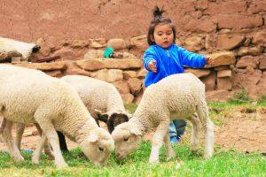Latin girl with sheep